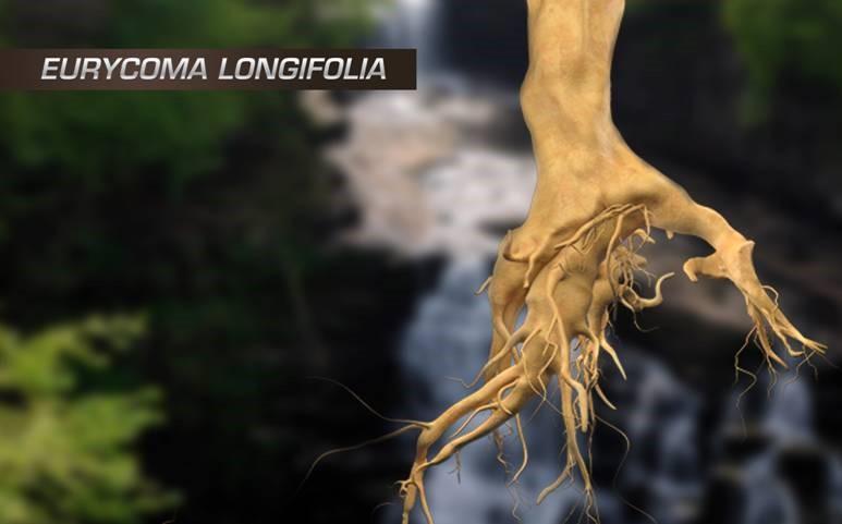 Tìm Hiểu Về Eurycoma Longifolia Jack Là Gì?