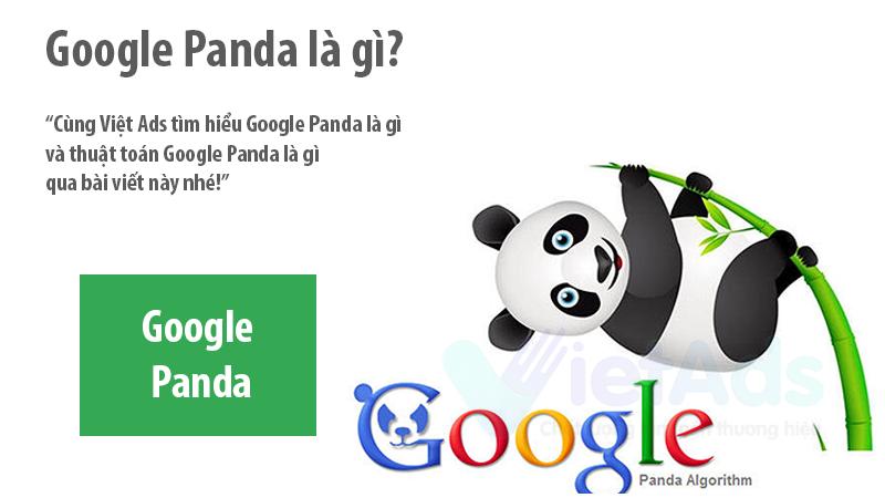 Google Panda là gì và thuật toán Google Panda bạn chưa biết?