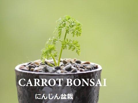 Bonsai Là Gì? Tìm Hiểu Về Bonsai Là Gì?